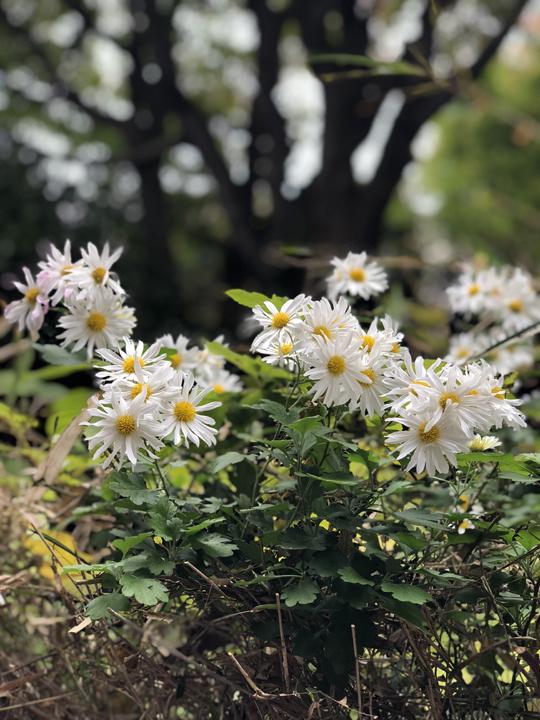 https://www.ao-daikanyama.com/information/upimg/20181221-10.jpg